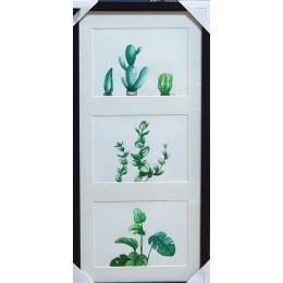 식물시리즈1